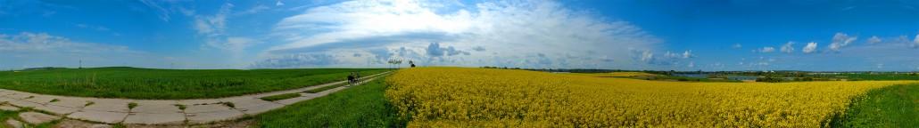 Panorama: Rapsblüte in der Uckermark