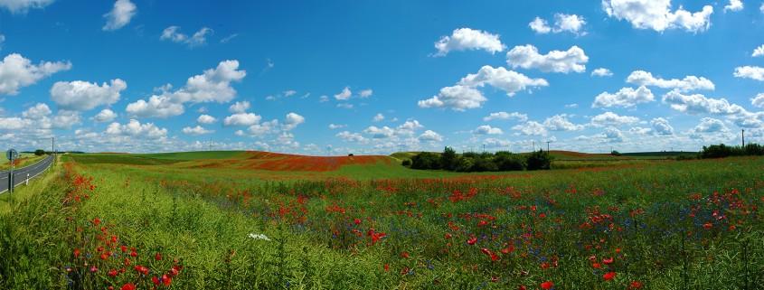 Panoramafoto: Mohnblüte in der Uckermark