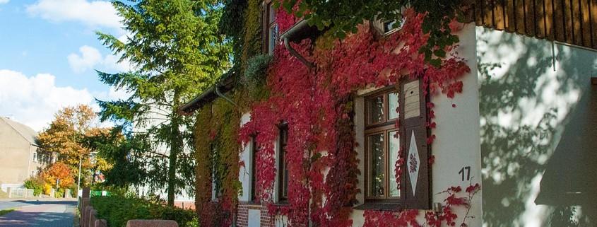 Wilder Wein an der Fassade
